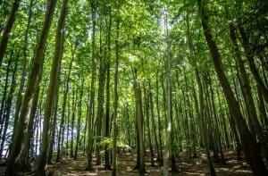 Duurzaamheid van modal - Beuken bos